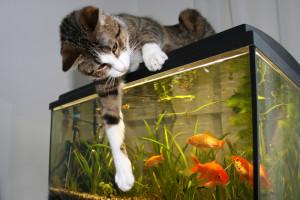 katt_och_fisk_274478459